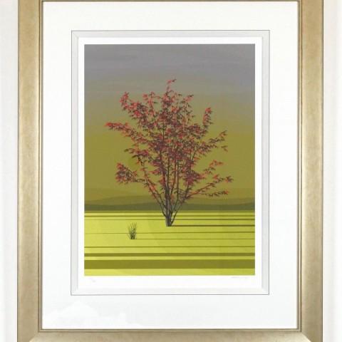 Spring Acer by Dan Crisp